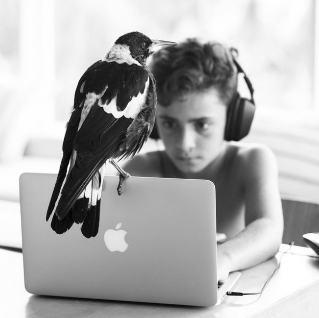 人鳥感情15