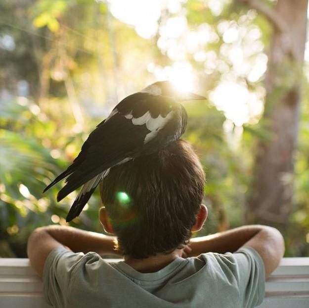 人鳥感情9