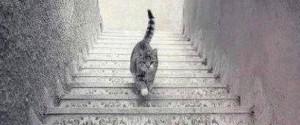 貓咪爬樓梯