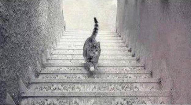 貓咪爬樓梯1