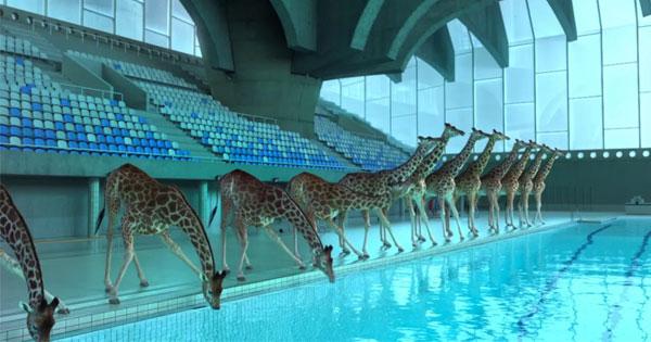 看一群3D長頸鹿表演花式跳水,會讓人有莫名的滿足感