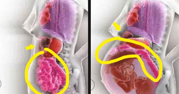 女人懷孕時,肚子裡器官移動的驚人模樣