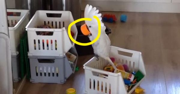 為了聽見自己的聲音,這隻鸚鵡對著小杯子大叫「啊!!!!」